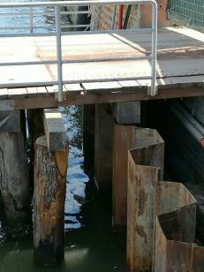 04 palancole sotto pontile luglio 2020 - Bonifica Gasometri Venezia